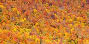 Fall foliage forest in White Mountain