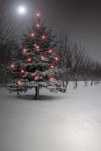 holiday Christmas tree in the snow